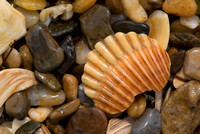 Shell and Polished Stones, Southern Shores