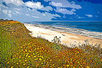 Half Moon Bay Flowers, Beach, Sky