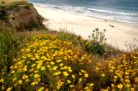 Half Moon Bay Flowers and Beach